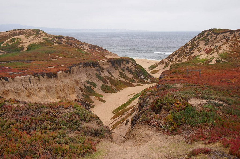 Fort_Ord_Dunes_2013