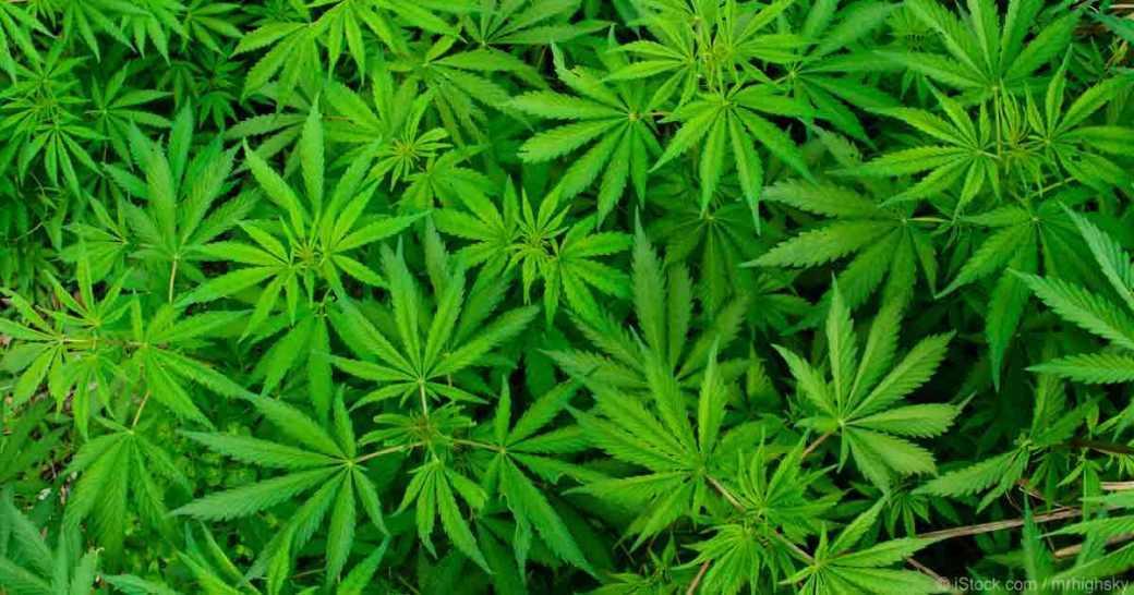research-supports-marijuana-benefits-fb